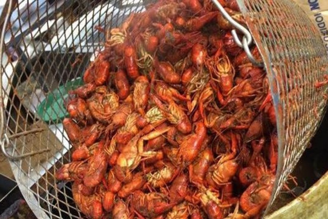 Louisiana Crawfish Catering